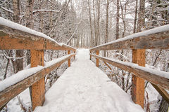 Snow Covered Bridge. Head on view of a snow covered bridge in the forest Royalty Free Stock Photo