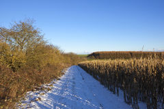Snow covered bridleway Stock Photo