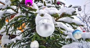 Snow-covered bright and multi-colored Christmas tree decorations on a snowy New Year tree royalty free stock image
