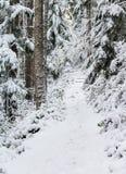 Snow covered Burley mountain trail,winter 2018, Washington, USA royalty free stock photography