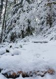 Snow covered Burley mountain trail,winter 2018, Washington, USA stock image
