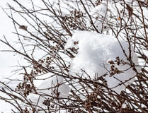 Snow covered bush Stock Image