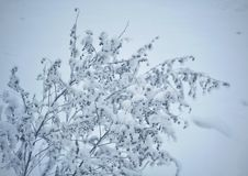 Snow-covered bush after the first snowfall close-up royalty free stock photography