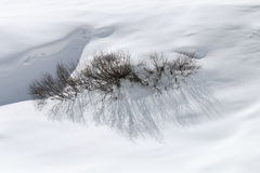 Snow Covered Bush In The Oetztal, Austria Royalty Free Stock Images