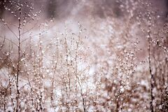 Snow covered bush in winter royalty free stock photo