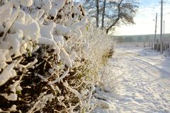 Snow-covered bushes along the fence. Wooden fence along a snow covered path. Snow-covered bushes along the fence. Wooden fence along a snow covered path Stock Photos