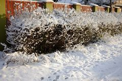 Snow-covered bushes along the fence. Wooden fence along a snow covered path. Snow-covered bushes along the fence. Wooden fence along a snow covered path Stock Image