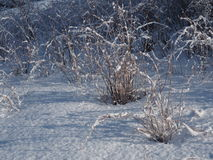 Snow covered Bushes Stock Photography