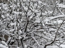 The snow-covered bushes in park. Royalty Free Stock Photography