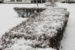 Snow-covered bushes in the park. In winter Stock Photos