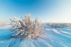 Snow-covered bushes on the rocky plateau. Royalty Free Stock Photography