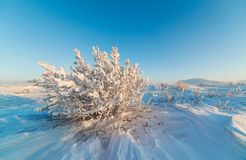 Snow-covered bushes on the rocky plateau. Stock Photo