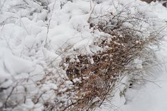 Snow-covered bushes.Texture. Heavy snow this winter. Snow-covered bushes. Texture. Heavy snow this winter Stock Image