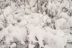 Snow-covered bushes.Texture. Heavy snow this winter. Snow-covered bushes. Texture. Heavy snow this winter Stock Photo