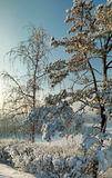 Snow covered bushes and trees in winter.  Stock Image