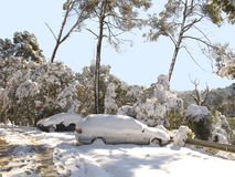 Snow covered cars Royalty Free Stock Image