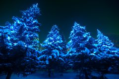 Snow covered Christmas tree lights in a winter royalty free stock photography