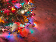 Snow Covered Christmas Tree Royalty Free Stock Image