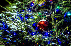 Snow covered Christmas tree and red ball Royalty Free Stock Photo