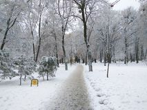 Snow covered city park on a windless day stock photography