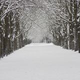 Snow-covered city street. Winter season. Trees covered with snow Royalty Free Stock Photography