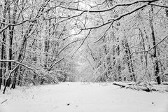 Snow covered clearing in a forest is a winter wonderland Royalty Free Stock Photography