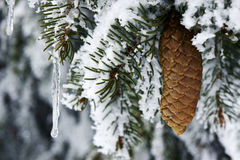 A snow-covered cone and icicles in Hory Mountains Stock Photos