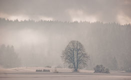 Snow covered country. Country covered in fresh snow stock image