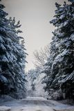 Snow covered country road. Cold and snowy winter road with blue evergreens and grey clouded skies Royalty Free Stock Photos