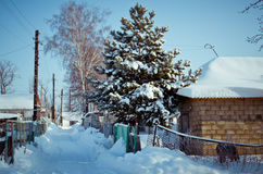 Snow-covered country road. Royalty Free Stock Image