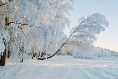 Snow covered country scene royalty free stock photography