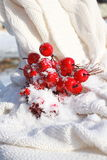 Snow Covered Crab Apples Stock Photos