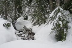 Mount Seymour snowshoe trail. Stream covered in snow on Mount Seymour snowshoe trail Royalty Free Stock Images
