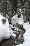 Mount Seymour snowshoe trail. Stream covered in snow on Mount Seymour snowshoe trail Royalty Free Stock Photo