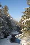 Snow covered creek in Pine Forest. Partially frozen creek meandering through a pine forest after a snowfall, with morning light Royalty Free Stock Photography