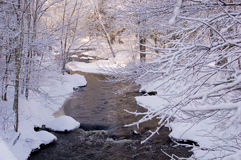 Snow covered creek in Pine Forest. A snow covered creek meanders through a pine forest shortly after a snowfall, with morning light Royalty Free Stock Photos