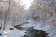 Snow covered creek in Pine Forest. A snow covered creek meanders through a pine forest shortly after a snowfall, with morning light Stock Photo