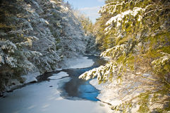 Snow covered creek in Pine Forest Stock Photos
