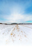 Snow covered crop field with blue sky Stock Photo