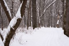 Snow covered cross country ski trail surrounded by snow covered trees on both sides. In winter stock photography