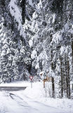 Snow covered crossing routes flanked by pine wood Stock Images