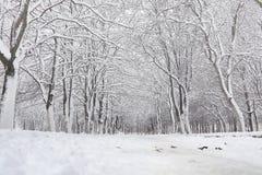 Snow-covered de winterpark en banken Park en pijler voor het voeden Stock Afbeelding