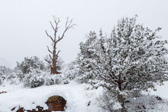 Snow Covered Desert Landscape Royalty Free Stock Photography