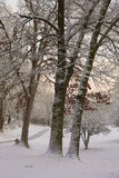 Snow Covered Driveway. A tranquil wintry scene includes snow covered trees and bushes and a winding driveway that has recently been plowed. The sky is lit up Stock Images