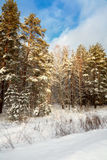 Snow-covered edge of wood near road Royalty Free Stock Photos