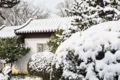 Snow covered Euonymus japonicus Thunb Stock Photography