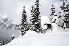Snow Covered Evergreens Royalty Free Stock Photography