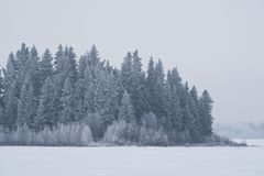 Snow Covered Evergreens, Elk Island National Park, Canada. Snow covered evergreens on an island in frozen Astotin Lake, Elk Island National Park, Alberta, Canada royalty free stock image