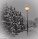 Snow covered evergreens with laminated street lamp. Evergreen trees covered in fresh snow with luminaries street lamp Royalty Free Stock Photography