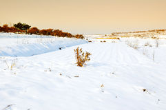 Snow-covered farm. Morning, the snow-covered farms, farmland has been invisible, only Quercus acutissima trees and pine trees stand in the snow Royalty Free Stock Photography